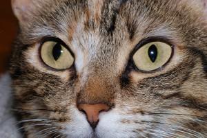 Cat_eyes_2007-2